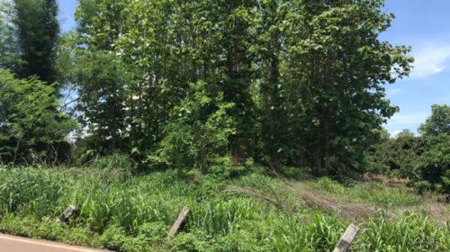 ขายถูกมากที่ดินแม่แตง เหมาะสร้างบ้าน ที่ดินทำเลดี ชุมชนดี   4 ไร่27 ตารางวา ไร่ 9.5 แสน แถมต้นสัก 750 ต้น
