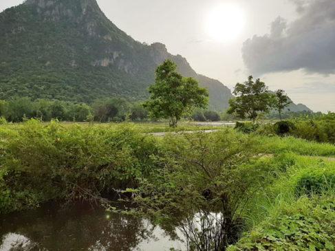 ที่ดินเขาย้อยเพชรบุรีขายถูกมากไร่ละ300000