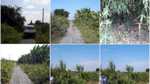 ขายที่ดินจัดสรรบางเลน จ. นครปฐม เนื้อที่ 270 ตร.วา ชุมชนดี เหมาะสร้างบ้าน ใกล้ถนนหลัก สายบางใหญ่-กาญจนบุรี